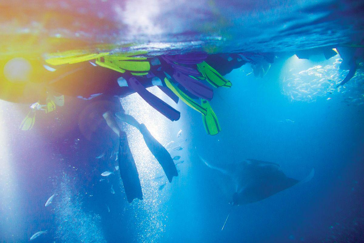 hawaii manta rays kailua kona
