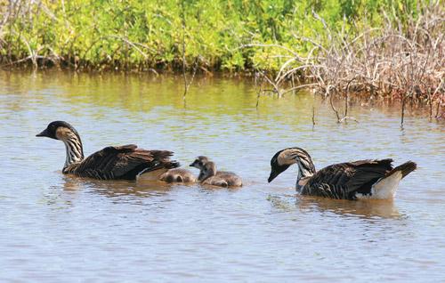james_campbell_national_wildlife_refuge_Oahu