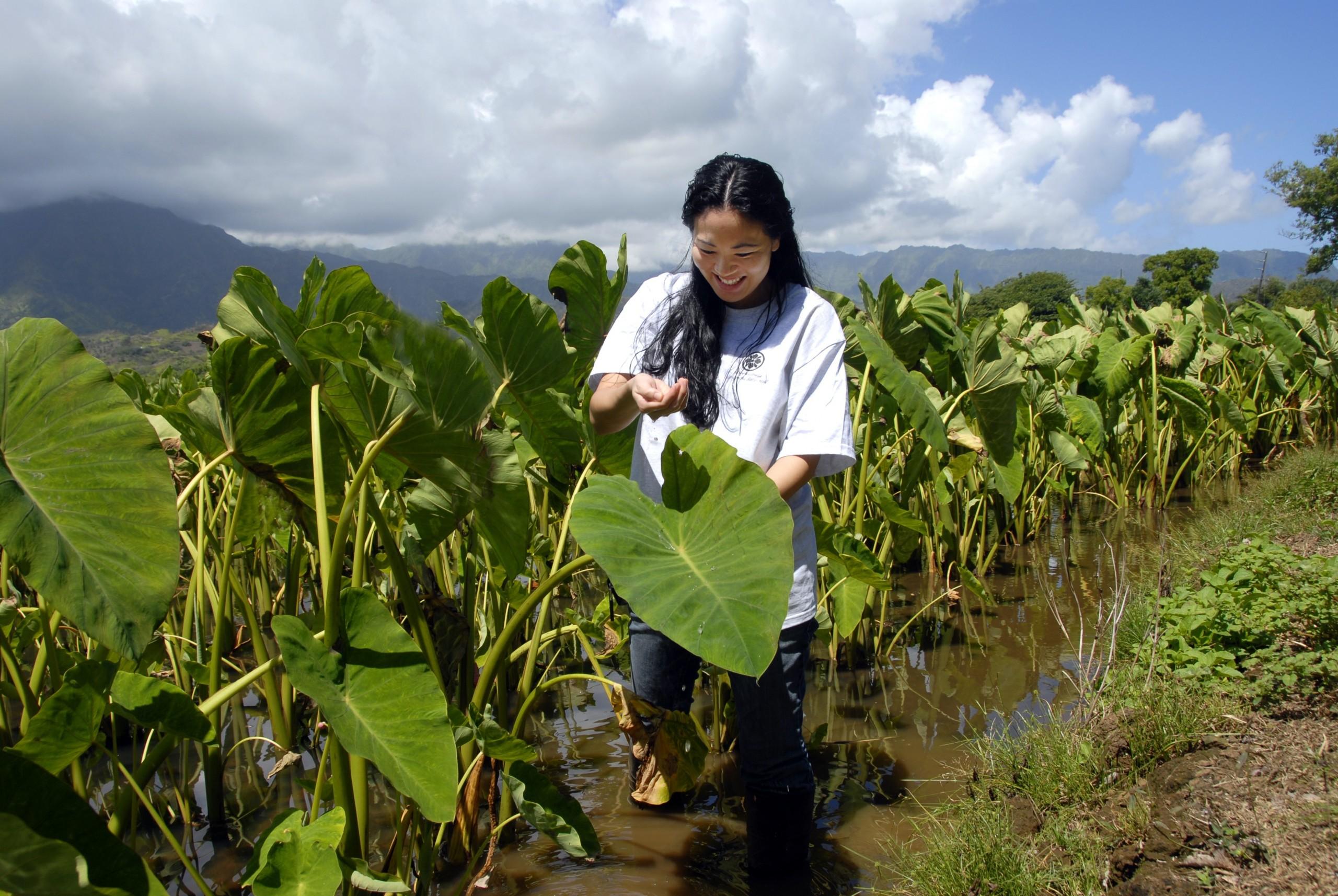 Kauai_Hanalei_valley_taro_fields_tour