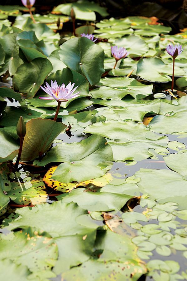 garden of eden botanical gardens