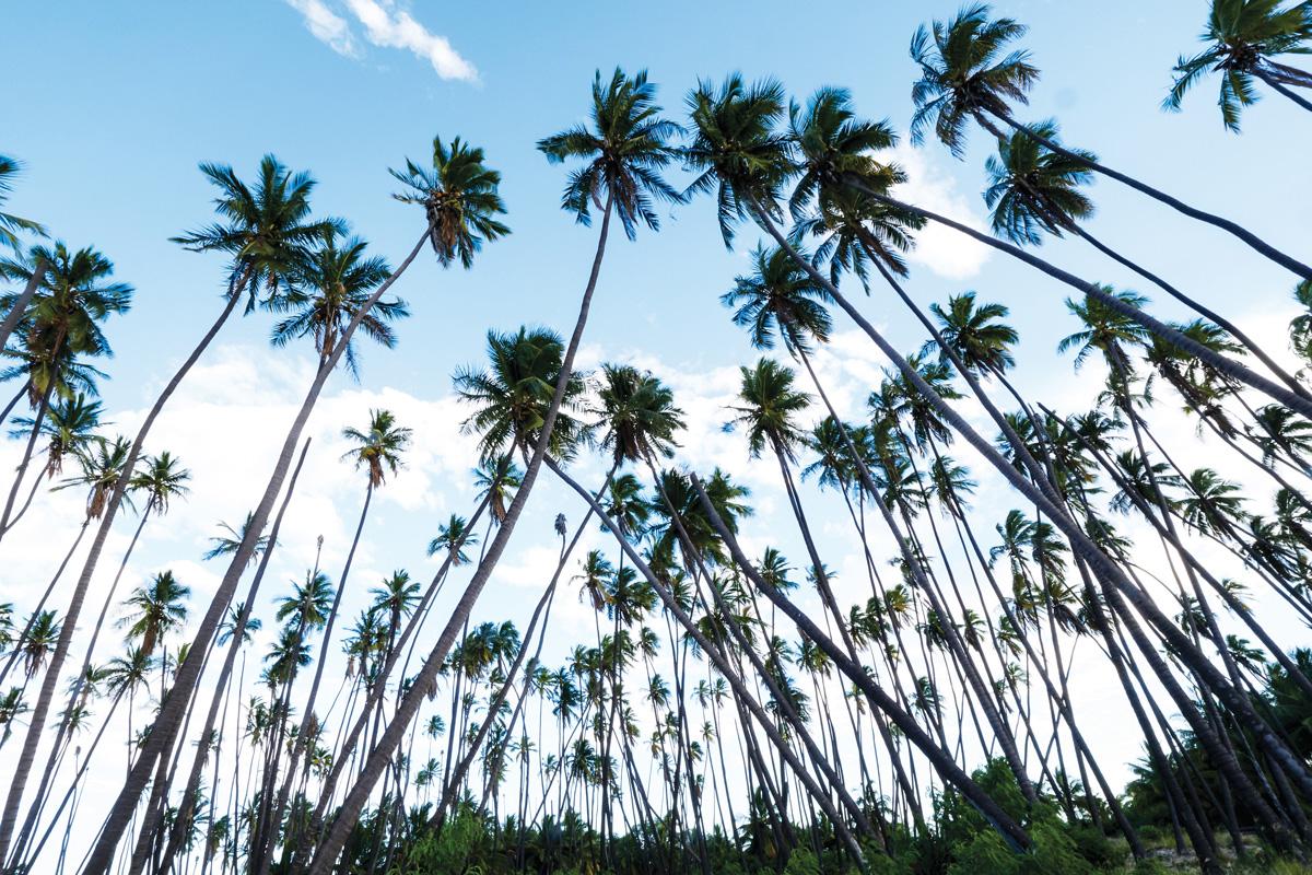 palms molokai