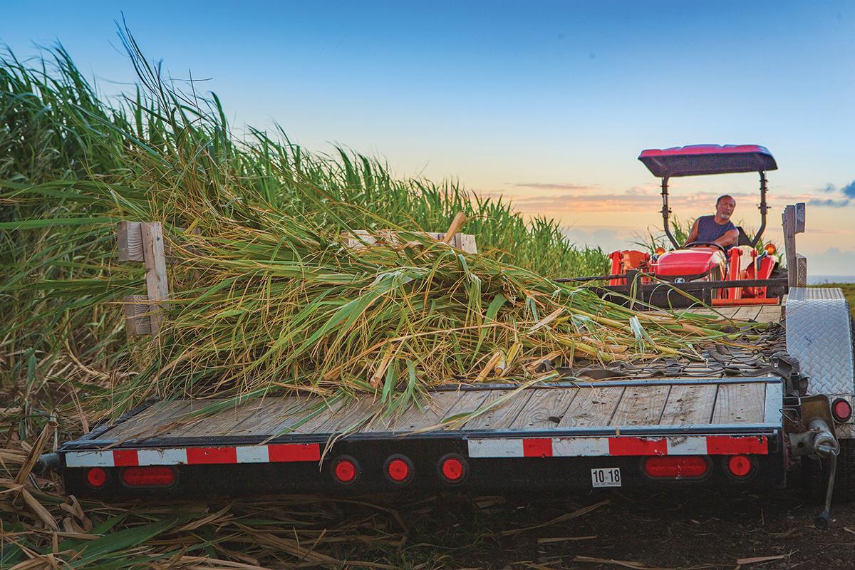 harvesting stocks