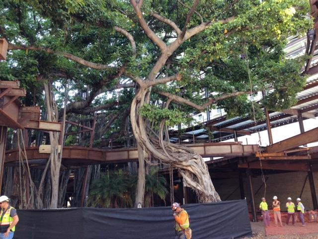 international-market-place-banyan-tree-waikiki