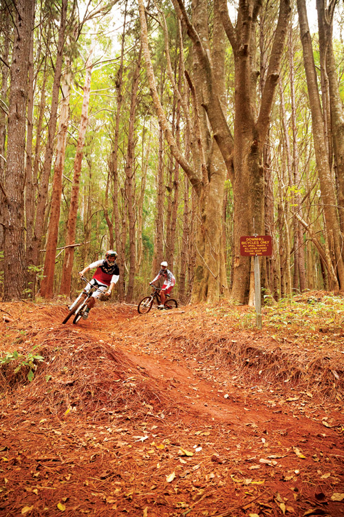 mountain_biking_maui_makawao_forest_reserve