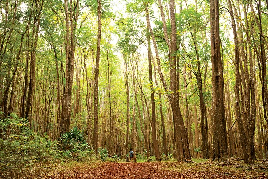 makawao-forest-reserve-maui