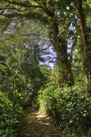 Lyon_Arboretum_mission_native_Hawaii_plants