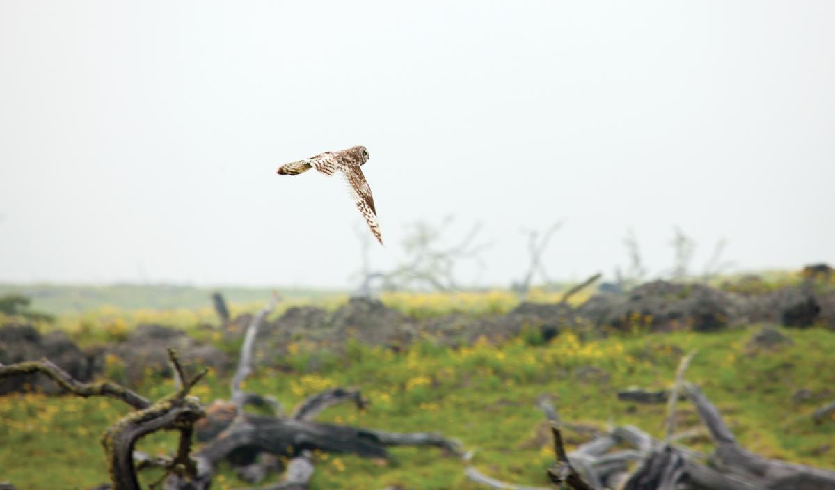 owl mana road