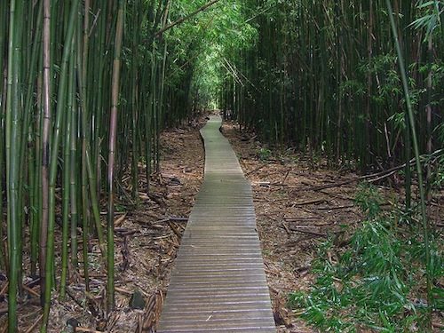 top_five_favorite_Hawaii_hiking_trails