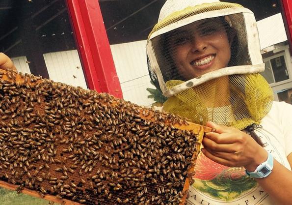 big island bees tour