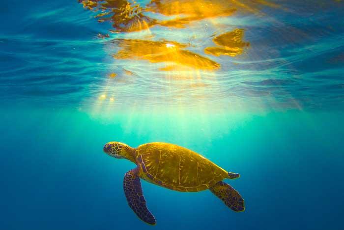 hawaii magazine photo contest