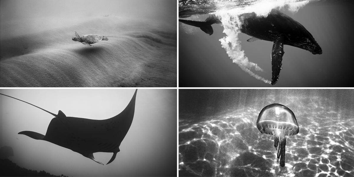 wayne-levin-underwater-photography-animals-hawaii
