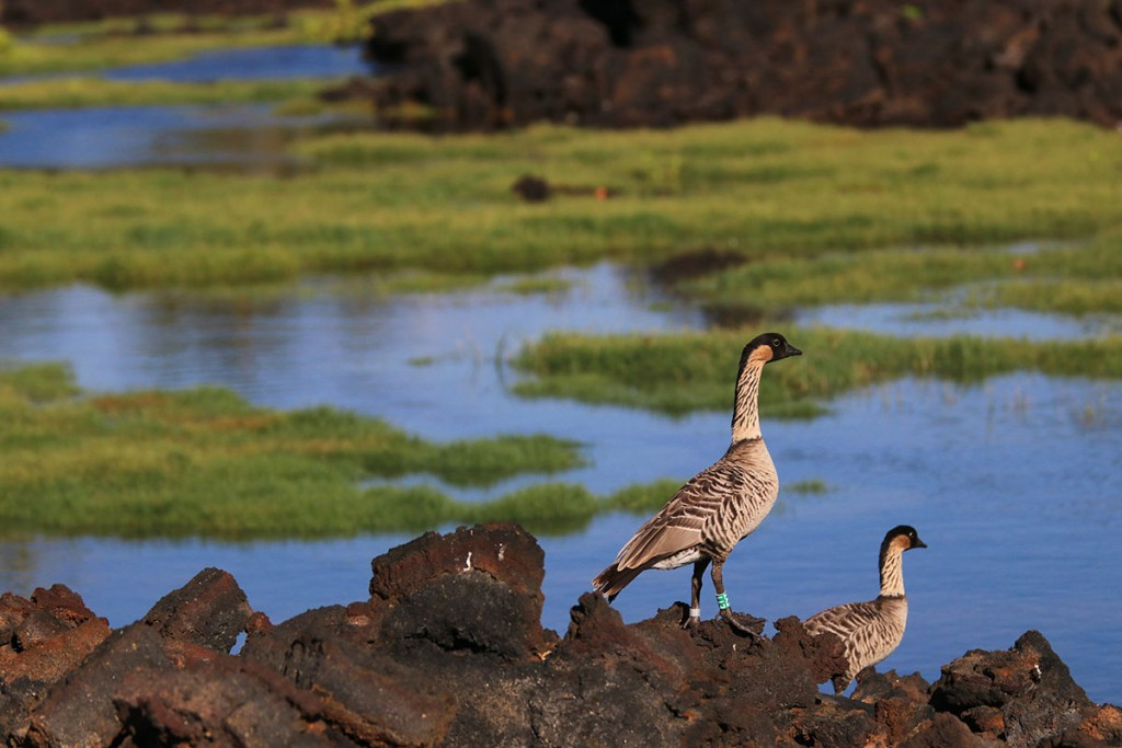 Anchialine Ponds Waikoloa