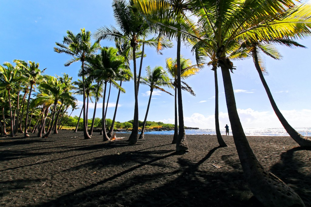Coconut Trees In Punaluu Black Sand Beach