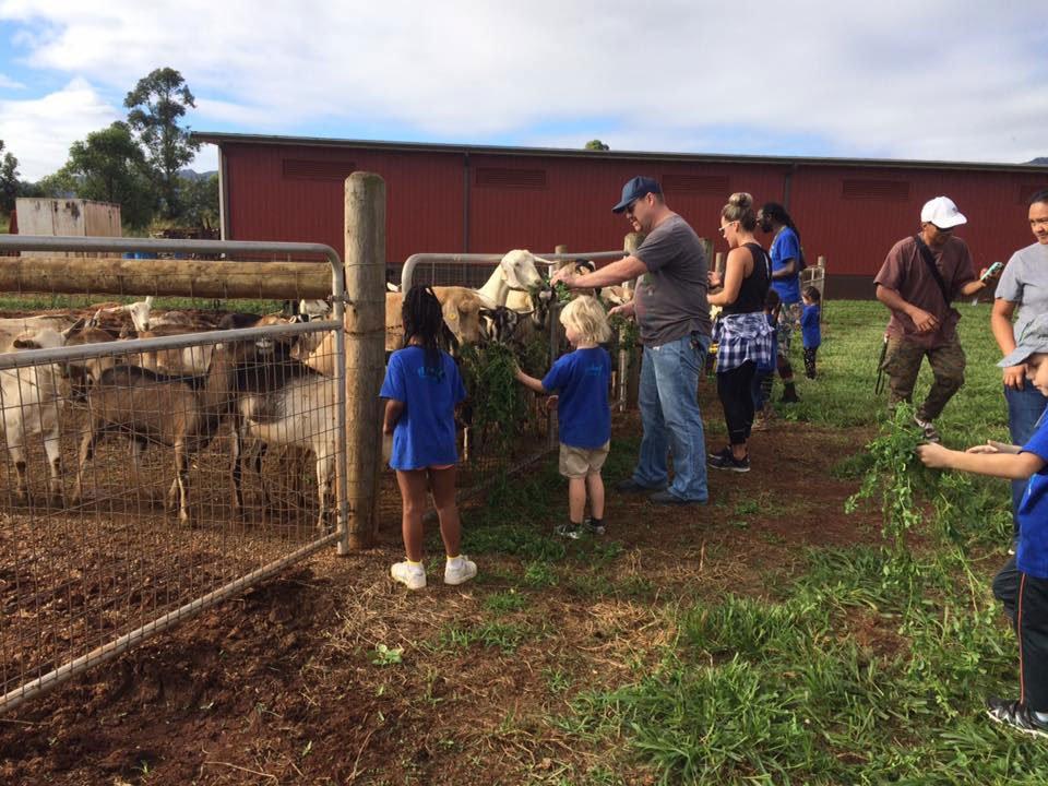 Alohafridaypicks Goats