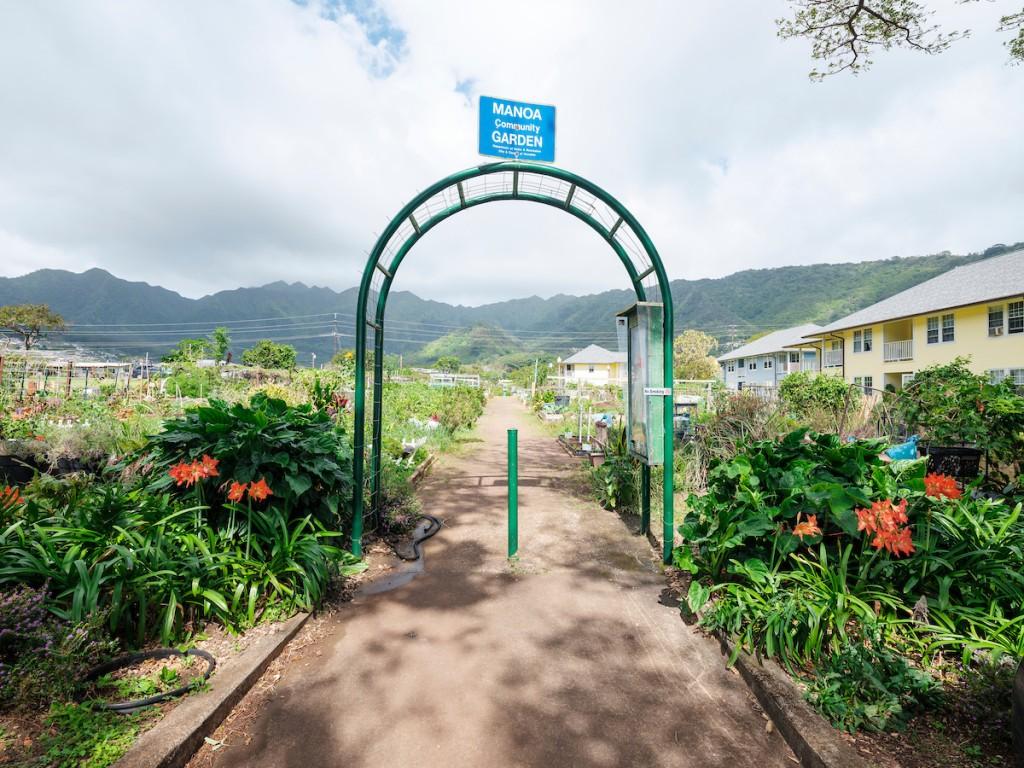 Him2104 Ay Community Gardens Manoa 7570