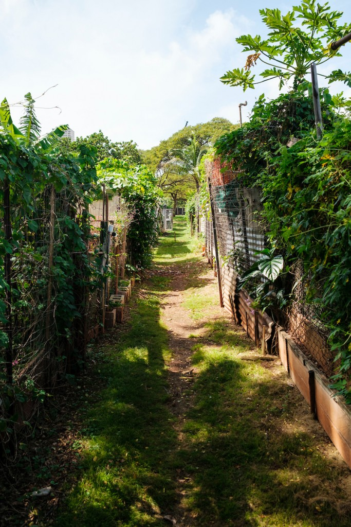 Him2104 Ay Community Gardens Ala Wai 2760