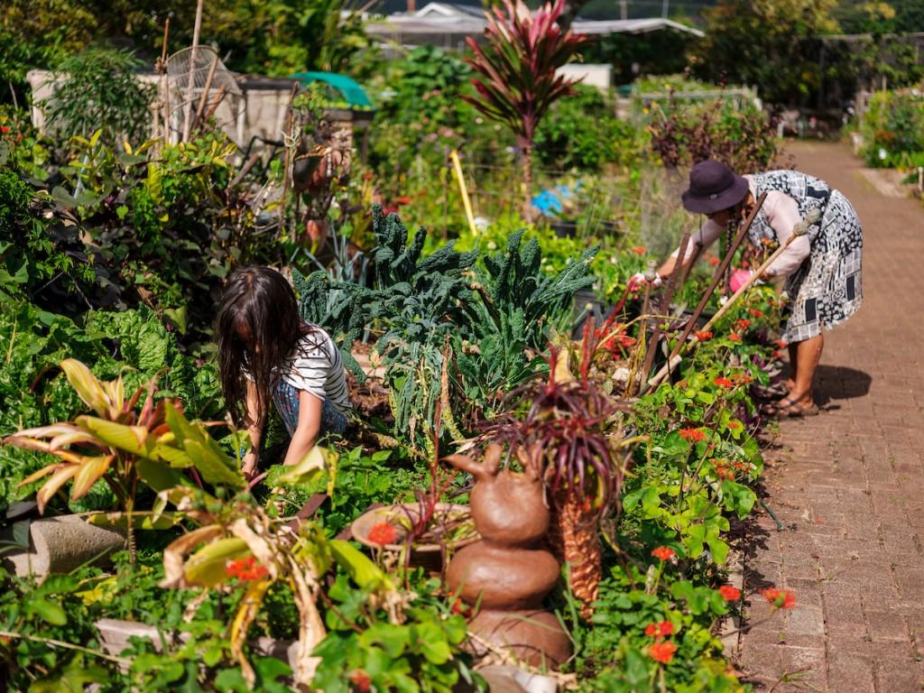 Him2104 Ay Community Gardens Manoa 7731