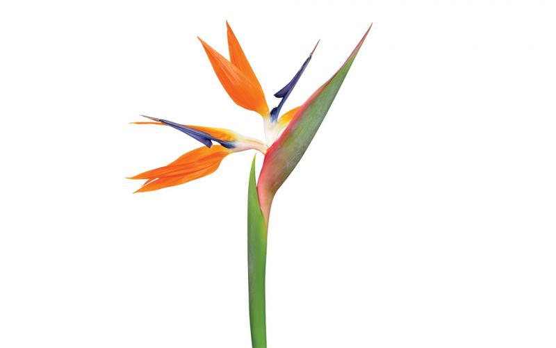 03 21 Hhr Welcome Florals Body2
