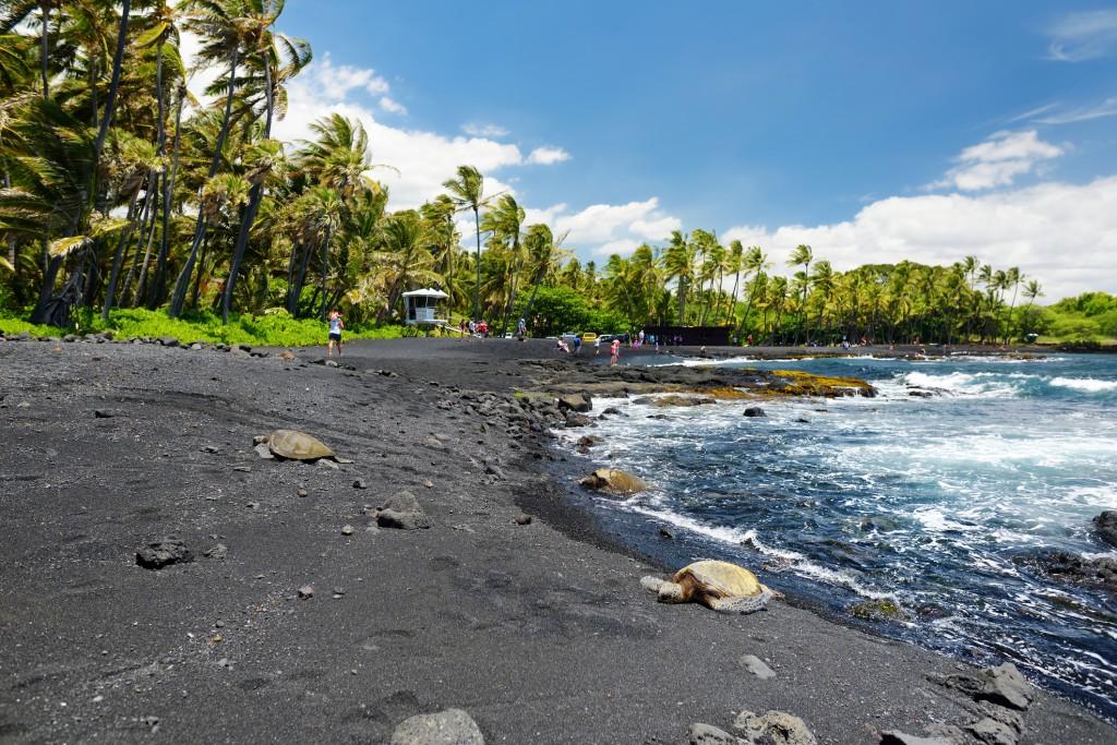 Hawaiian Green Turtles Relaxing At Punaluu Black Sand Beach On The Big Island Of Hawaii