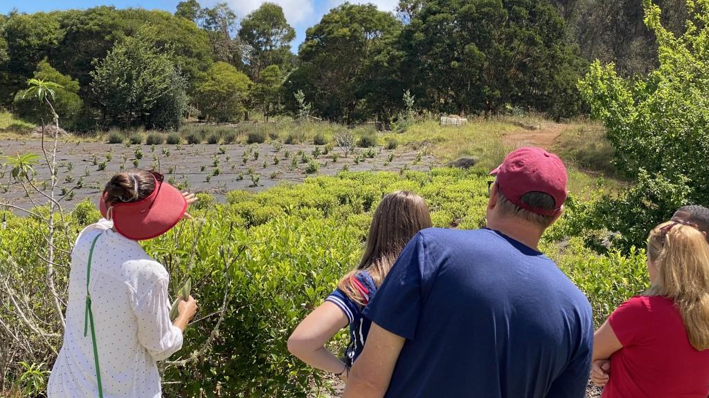 Andrea Shows The Tea Camellia Sinensis During Farm Tour