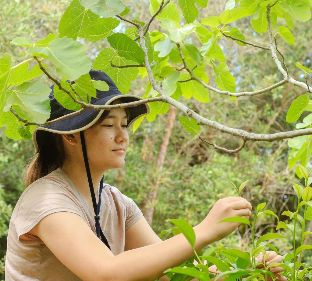 Stemworks Ag Intern Janine Harris Picks Fresh Tea Pekoe Shoots During A Tour