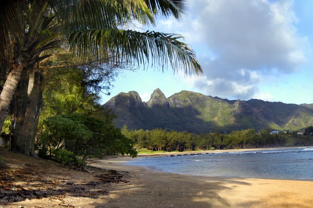 Fronds Frame Beach On Kauai